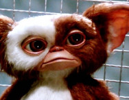 Chris Columbus Confirms a Reboot of Gremlins is in the Works